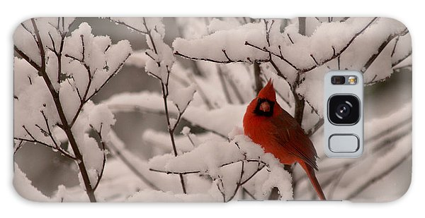 Male Cardinal Amongst Snowy Branches Galaxy Case