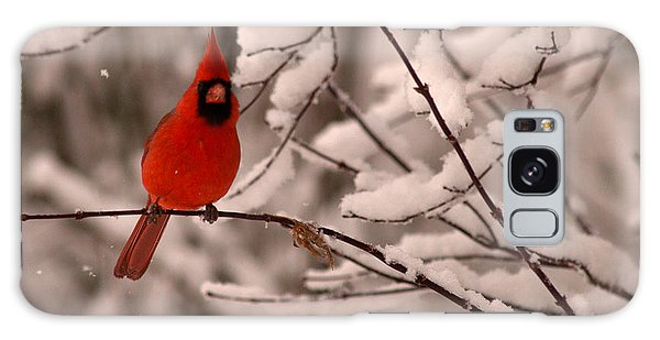 Male Cardinal In Snow Galaxy Case