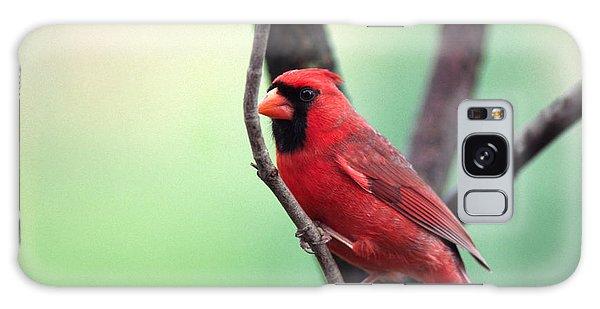 Male Cardinal Galaxy Case by Thomas R Fletcher
