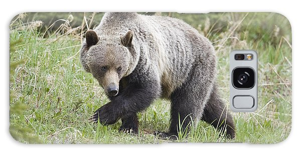 Male Grizzly In Kananaskis Galaxy Case