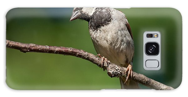 Male House Sparrow Perched In A Tree Galaxy Case