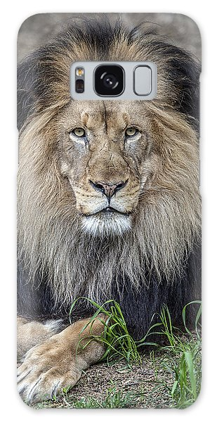 Male Lion Portrait Galaxy Case