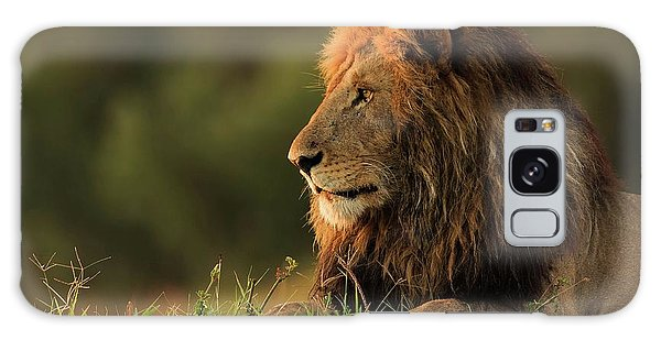 Lion Galaxy Case - Male Lion Watching Sunrise In Masai Mara by Massimo Mei