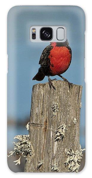Male Long-tailed Meadowlark On Fencepost Galaxy Case