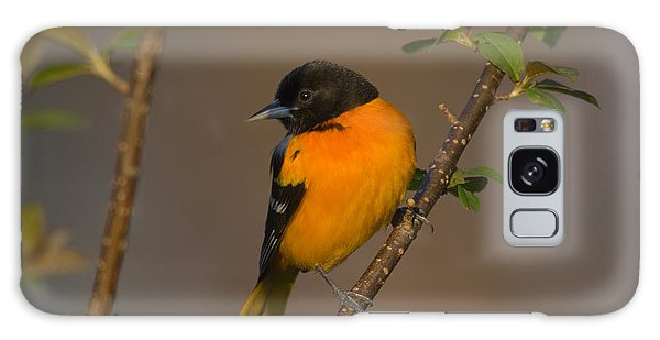 Male Northern Oriole Galaxy Case