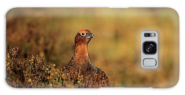 Cairngorms National Park Galaxy Case - Male Red Grouse by Duncan Shaw/science Photo Library