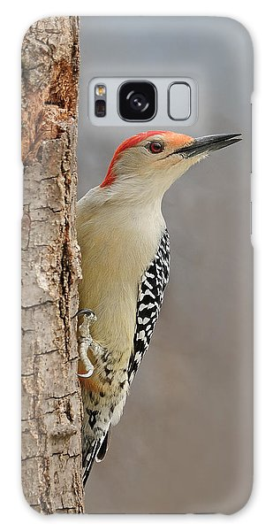 Male Redbellied Woodpecker 1 Galaxy Case