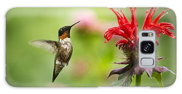 Male Ruby-throated Hummingbird Hovering Near Flowers Galaxy Case
