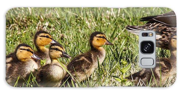 Mallard Ducklings Galaxy Case