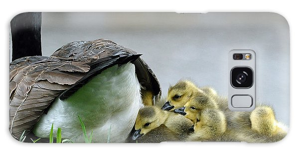 Mama And Goslings Galaxy Case by Lisa Phillips