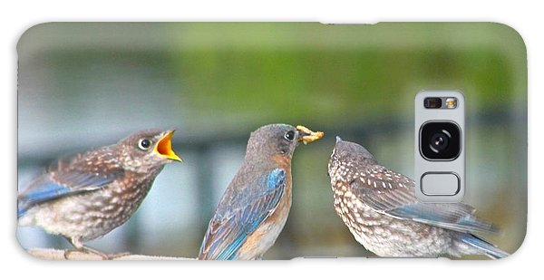 Mama Bluebird And Fledglings Galaxy Case