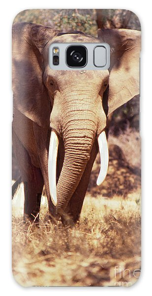 Mana Pools Elephant Galaxy Case