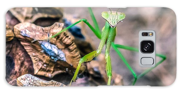 Mantis On A Pine Cone Galaxy Case by Rob Sellers