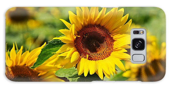 Many Sunflowers Only Two Bees Galaxy Case by Mike Martin