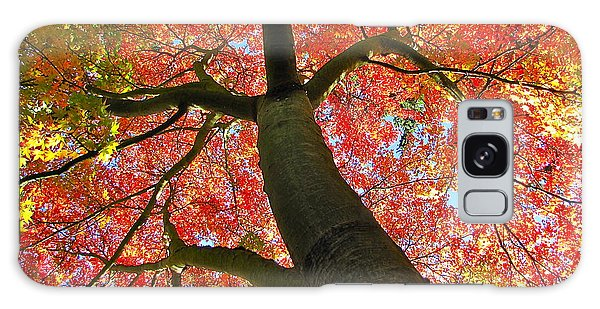 Maple In Autumn Glory Galaxy Case by Sean Griffin