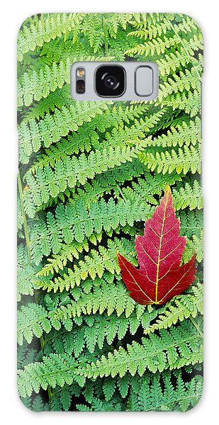 Maple Leaf On Ferns Galaxy Case by Alan L Graham