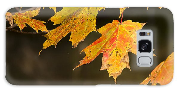 Maple Leaves In Autumn Galaxy Case by Larry Bohlin
