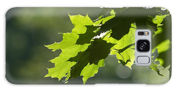 Maple Leaves In Summer Galaxy Case by Larry Bohlin