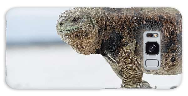 Galaxy Case featuring the photograph Marine Iguana Male Turtle Bay Santa by Tui De Roy