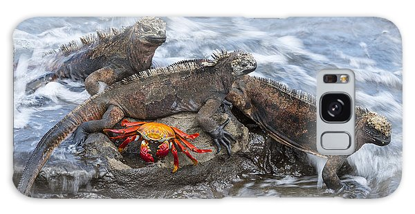 Galaxy Case featuring the photograph Marine Iguana Trio And Sally Lightfoot by Tui De Roy