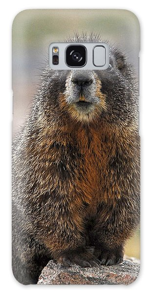 Galaxy Case featuring the photograph Marmot by Mae Wertz