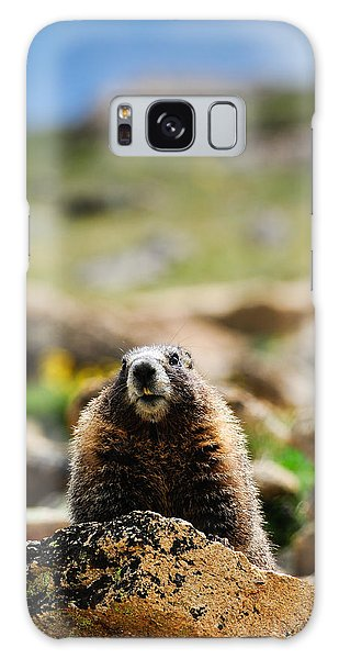 Marmot On A Rock Galaxy Case