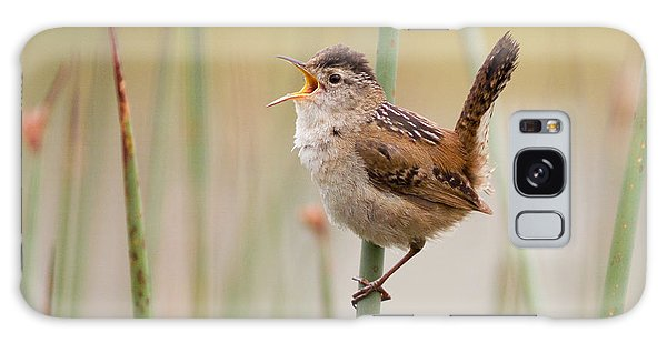 Marsh Wren Galaxy Case