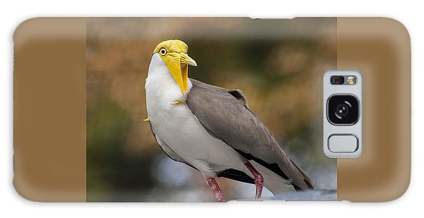 Lapwing Galaxy Case - Masked Lapwing by Carolyn Marshall