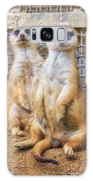 Meerkat Duo Galaxy Case