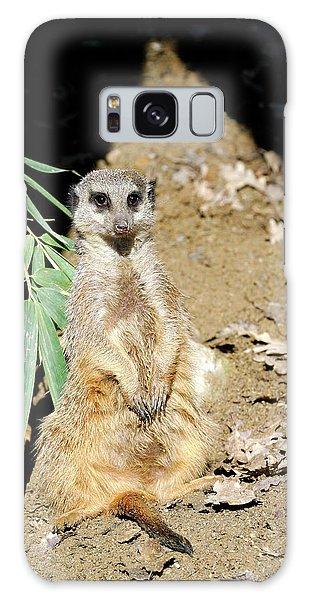 Meerkat Galaxy S8 Case - Meerkat by Heiti Paves