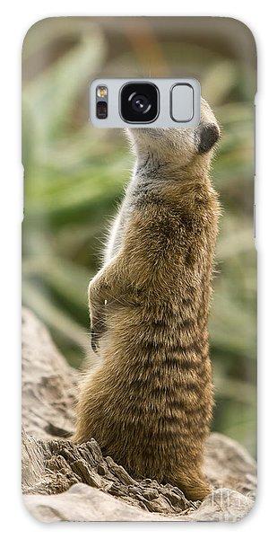 Meerkat Mongoose Portrait Galaxy Case by David Millenheft