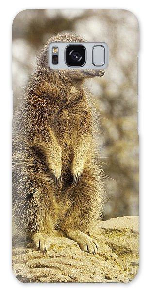 Meerkat Galaxy S8 Case - Meerkat On Hill by Pixel Chimp