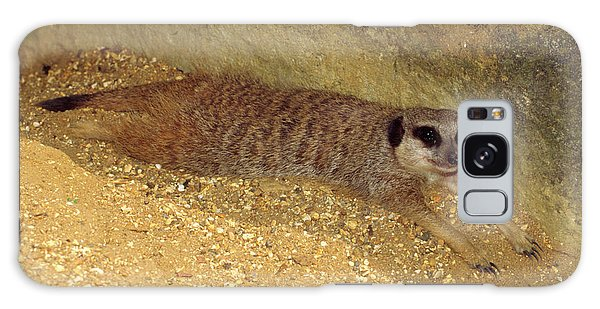 Meerkat Resting Galaxy Case