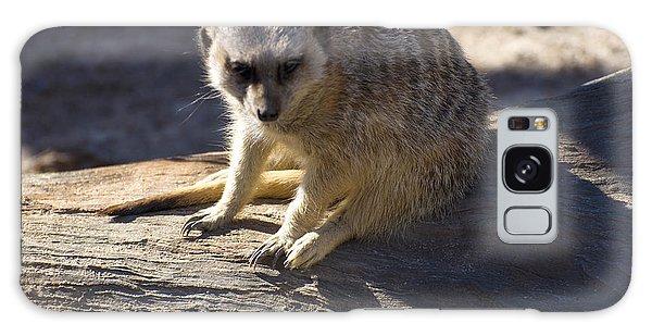 Meerkat Resting On A Rock Galaxy Case