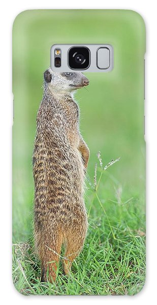 Meerkat Standing On Guard Duty Galaxy Case