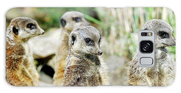 Meerkats Galaxy Case