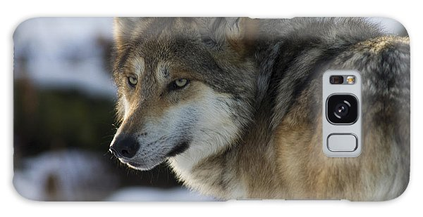 Mexican Gray Wolf Galaxy Case