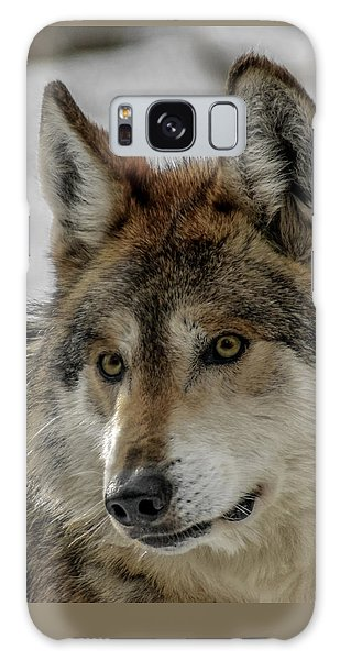 Mexican Grey Wolf Upclose Galaxy Case
