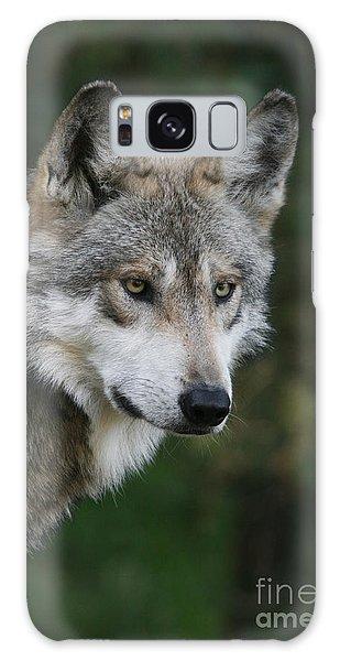 Mexican Wolf #4 Galaxy Case