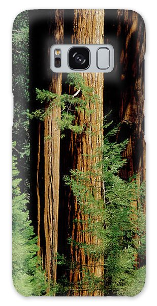 Kings Canyon Galaxy Case - Mid Section Of Giant Sequoia Trees by Greg Probst