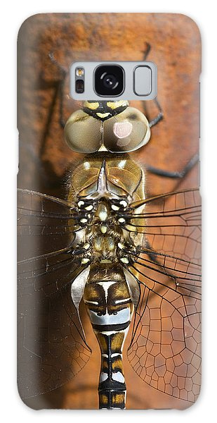 Migrant Hawker Dragonfly Closeup Galaxy Case