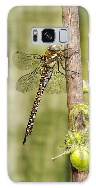 Migrant Hawker Dragonfly Galaxy Case