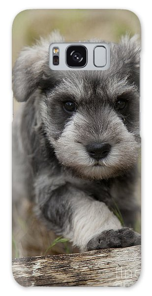 Mini Schnauzer Puppy Galaxy Case
