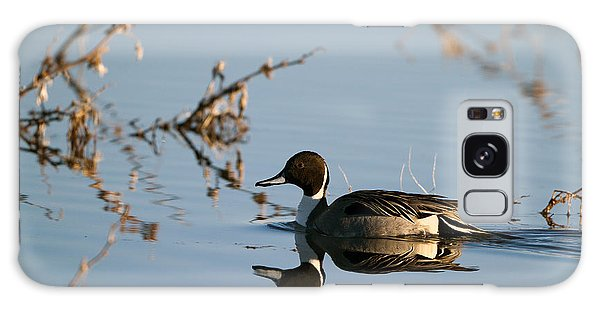 Northern Pintail Mirror Image Galaxy Case