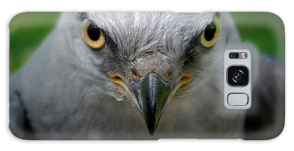 Mississippi Kite Stare Galaxy Case