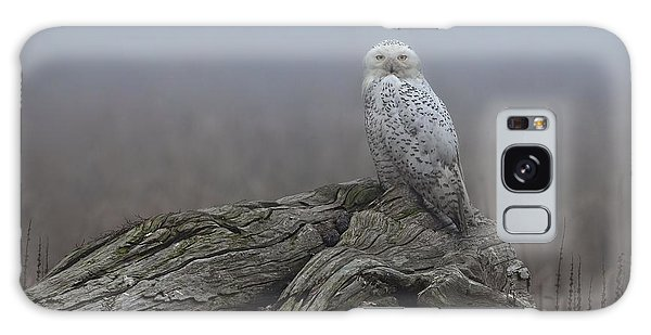 Misty Morning Snowy Owl Galaxy Case by Daniel Behm