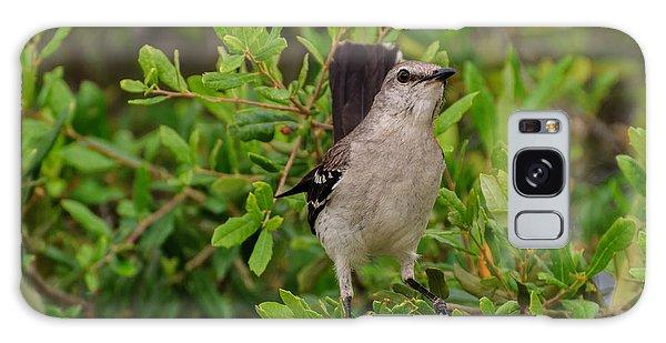 Mockingbird In Tree Galaxy Case