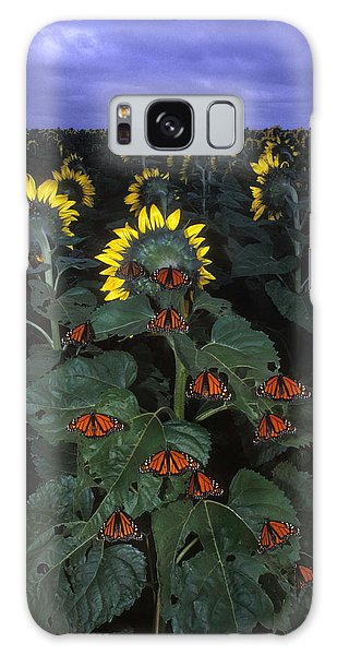 Helianthus Annuus Galaxy Case - Monarch Butterflies by Jim Reed/science Photo Library