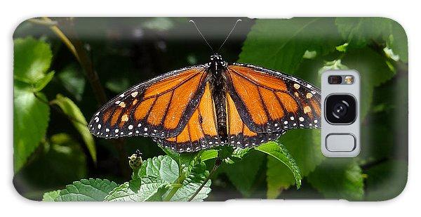 Monarch Butterfly Galaxy Case by David Nichols