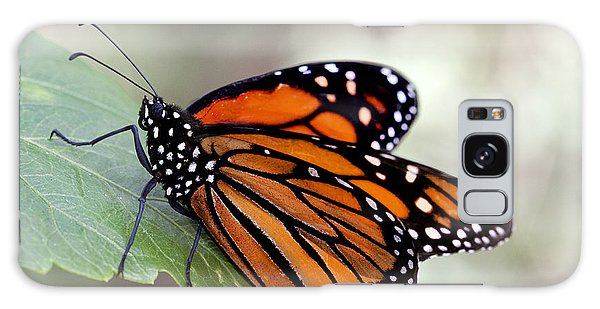 Monarch Resting On A Leaf Galaxy Case